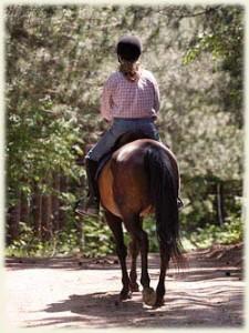 Horseback trail riding in Muskoka