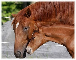 Mare horse and her foal