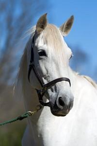 Luna horse portrait